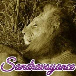 Le lion en danger !