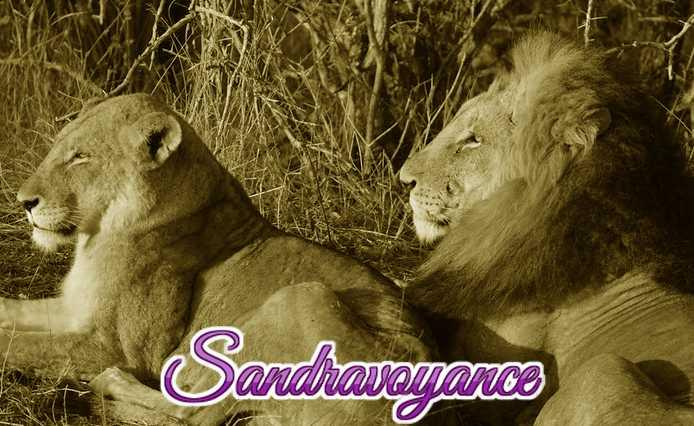 Lion en danger de disparaitre